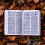 book-leaf-open-book-autumn