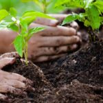 hands-planting-trees